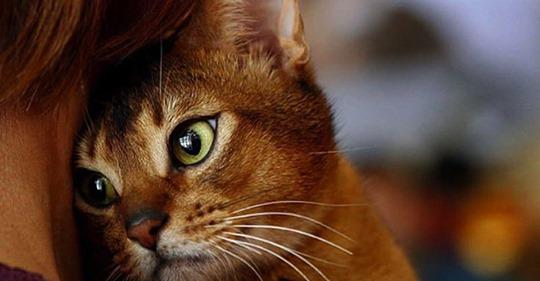 Миссия кошки – очистить вашу жизнь от негативной энергии