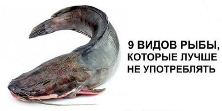 9 видов рыбы, которые лучше не употреблять
