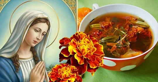 Золотые цветы, которые лечат желудок, печень и зрение! Как заваривать из них чай
