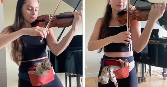 Видео с девушкой, играющей на скрипке для котенка, очаровало весь