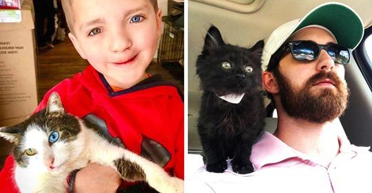 15 фотографий хозяев, которые взяли кота из приюта — и это была любовь с первого «мяу»