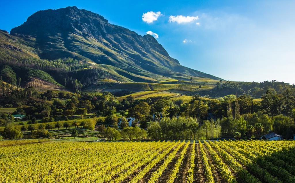 Вино из Южной Африки можно смело брать. Местные винодельни были названы одними из лучших в мире