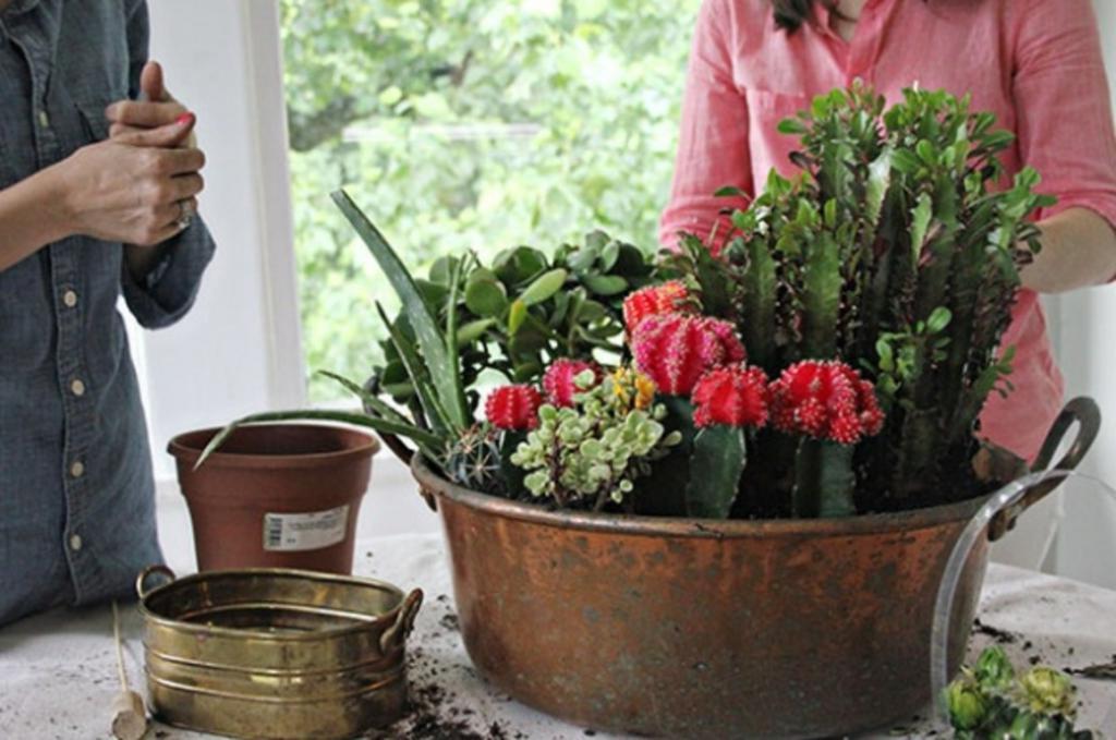 Из старого большого контейнера я сделала декоративный мини-сад для суккулентов. Он смотрится очень красиво и освежает и интерьер