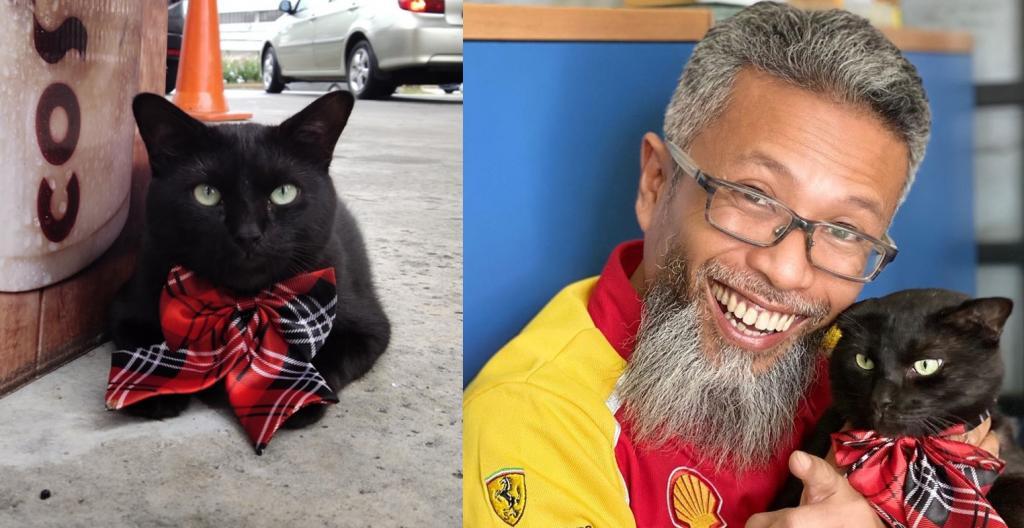 Благодаря человеческой доброте кот Хей-Хей обрел дом и построил карьеру главного администратора заправочной станции (фото)