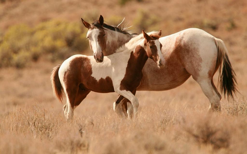 Новые генетические исследования показали, что первые домашние лошади появились не в Турции, а в Евразийской степи