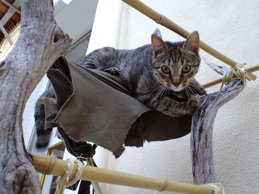 Котик был в восторге: смастерила для питомца копеечное дерево с гамаком