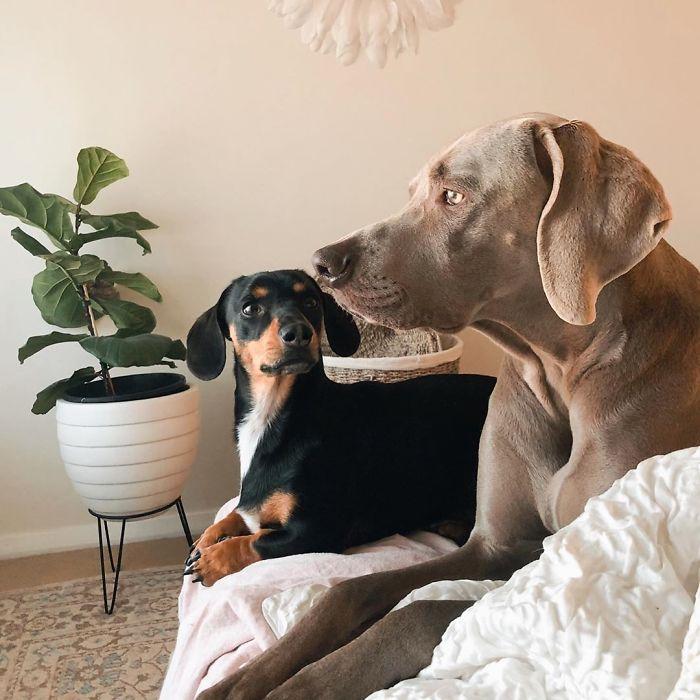 Хозяйка двух псов уверена: маленькая собака помогла большой избавиться от тревоги
