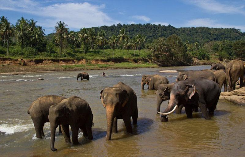 Старые слоны в стаде, как выяснили ученые, передают молодому поколению свой ценный опыт