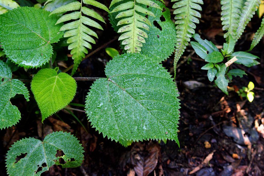В Австралии найдено растение, в котором содержится яд, похожий на яд скорпиона