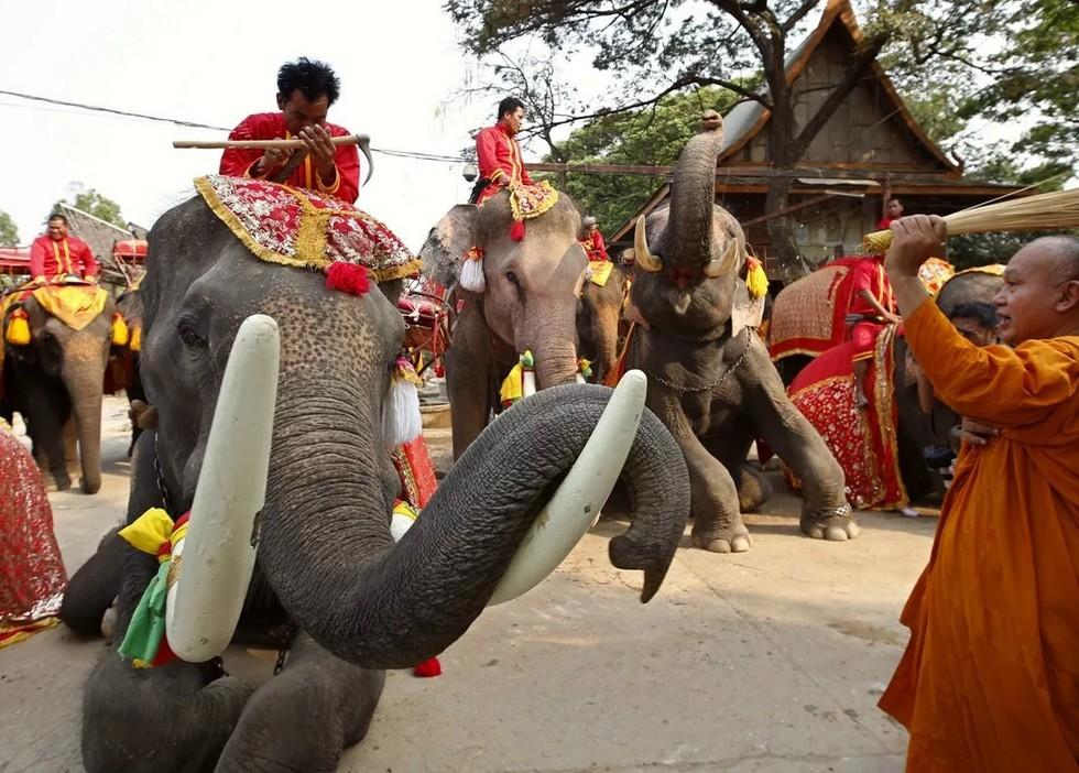 22 сентября в некоторых странах отмечают День благодарности слонам: оказывается, они умеют играть в дартс (видео)