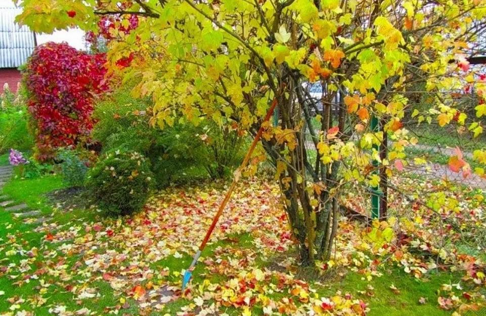 Какие минеральные удобрения вносить осенью под кустарники и деревья