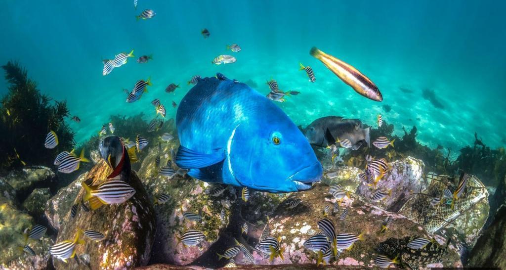 Большой Южный риф не так известен, как Большой Барьерный риф Австралии, но именно здесь находится царство лиственного дракона