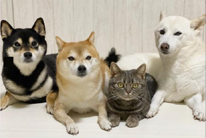 Когда щенки были маленькими, хозяева взяли к себе котенка: прошло несколько лет (фото)