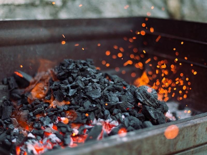 Более 50% продаваемого в Европе угля поступает из незаконно вырубленных тропических лесов, уверены ученые
