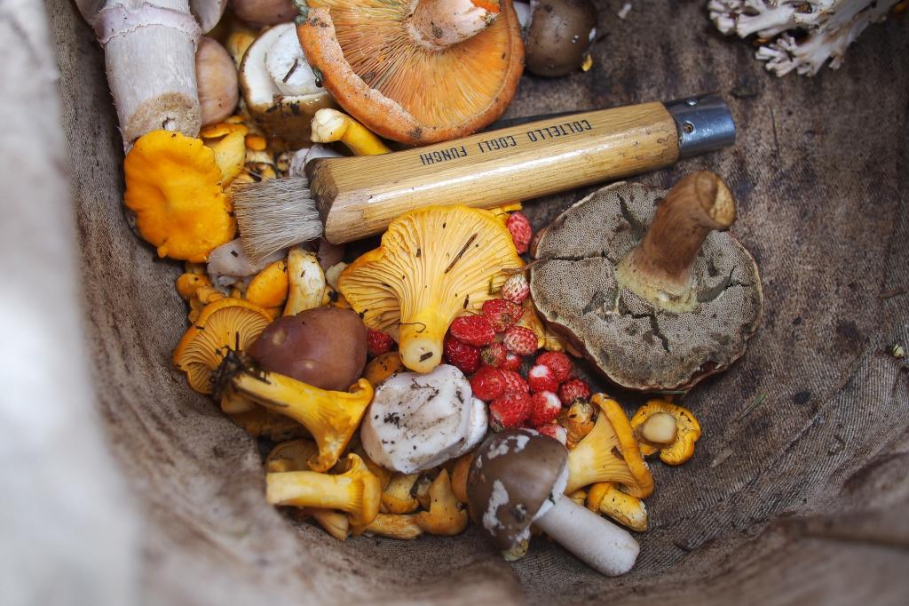 Итоги тихой охоты: как подготовить грибы на зиму. Тонкости приготовления и разные способы, проверенные временем