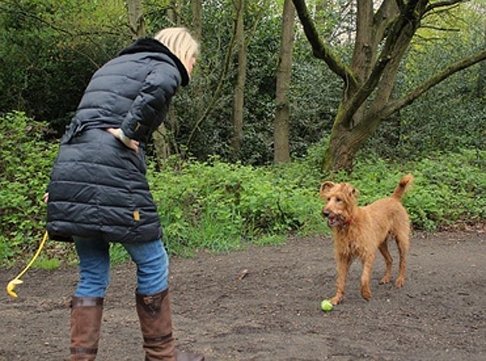 При знакомстве никогда не глажу по голове сразу: раскрываю секрет, почему меня любят все собаки, даже чужие