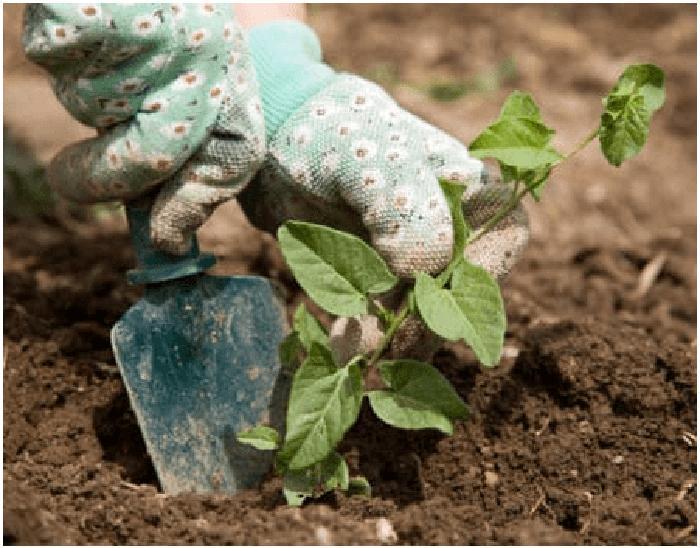 Чтобы на следующий год сад был красивым: полезные советы (листва, вода, шланги)