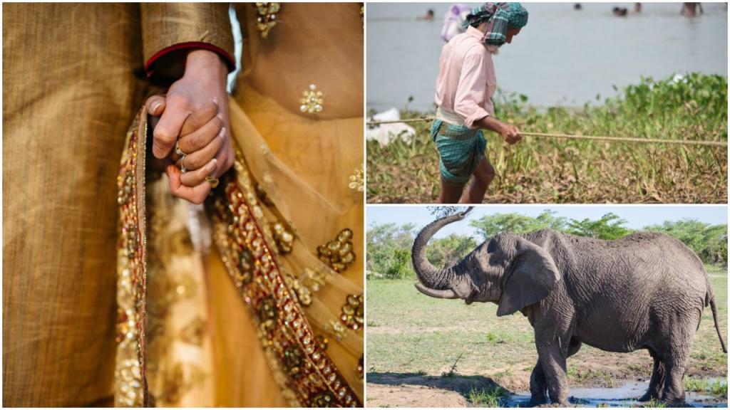 Знак любви и внимания: мужчина из Бангладеш продал землю и купил жене слона, о котором та давно мечтала