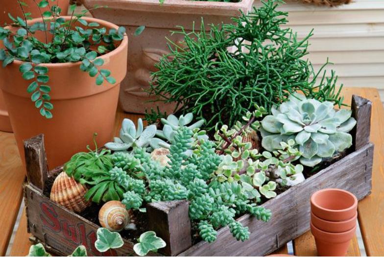 Комнатные растения, которые заменят домашнюю аптечку. Герань, алоэ, лавр среди них