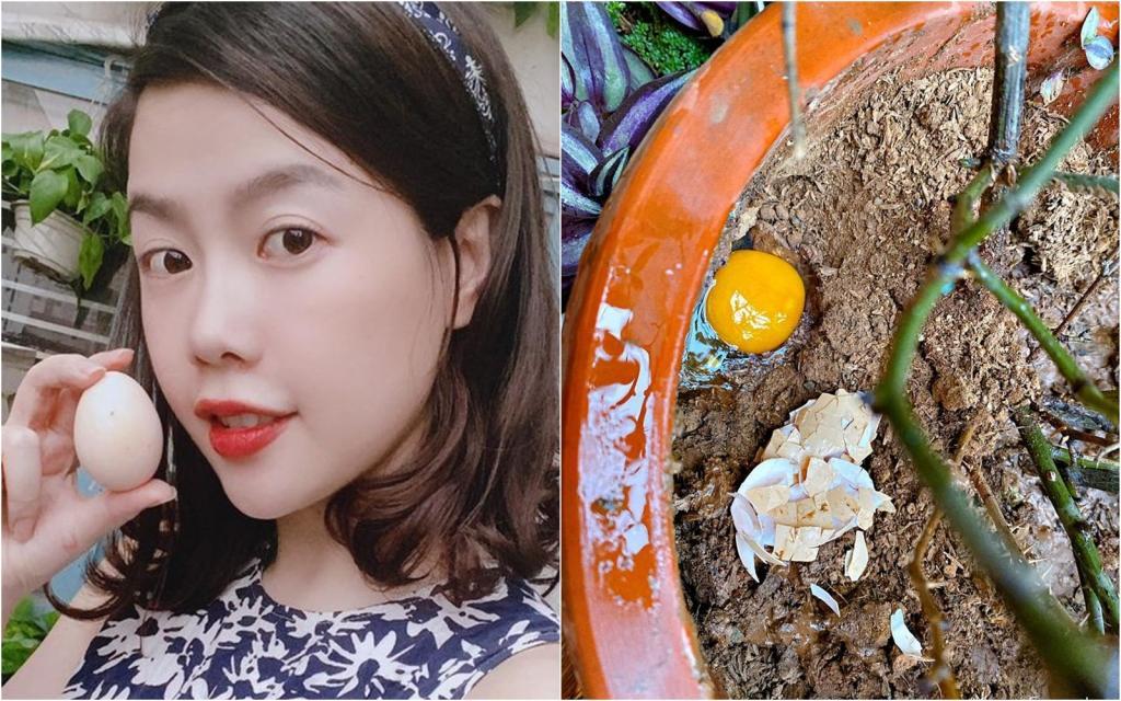 Самое доступное удобрение: девушка из Вьетнама использует в качестве подкормки для растений куриные яйца