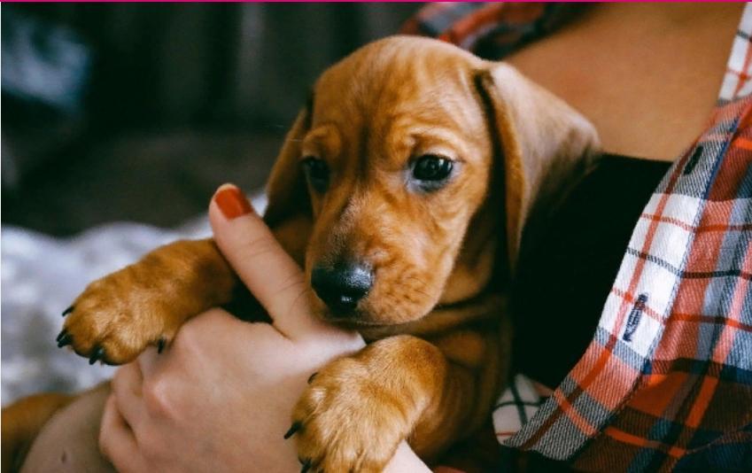 Порядок превыше всего: в немецком законодательстве прописано даже, с кем из разведенных супругов остается собака