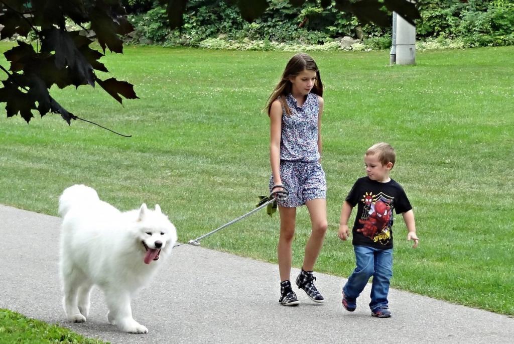 Убирать за собой в 2 года и кормить домашних животных в 8: что и когда нужно делегировать детям, чтобы приучить их к порядку