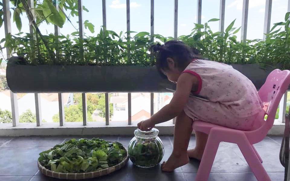 В пластиковых трубах: вьетнамка посадила огород на балконе. Сорняков нет, зелень и овощи всегда под рукой