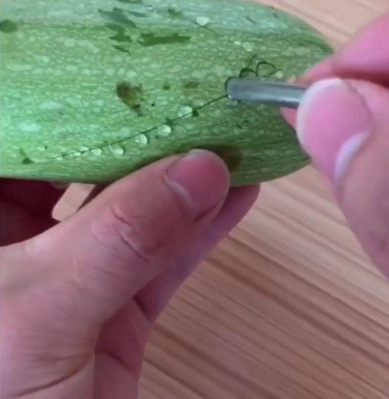 Мой антистресс растет прямо на огороде: создаю 3D-орнамент прямо на овощах – еще и детей подсадила