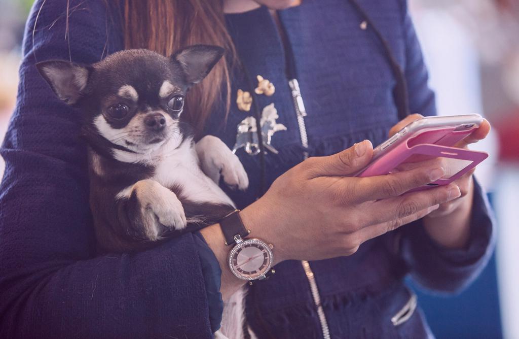 Прощай, Барбос! Увидимся через месяц: американцы готовы временно расстаться со своей собакой, лишь бы оставаться на связи. Результаты исследования