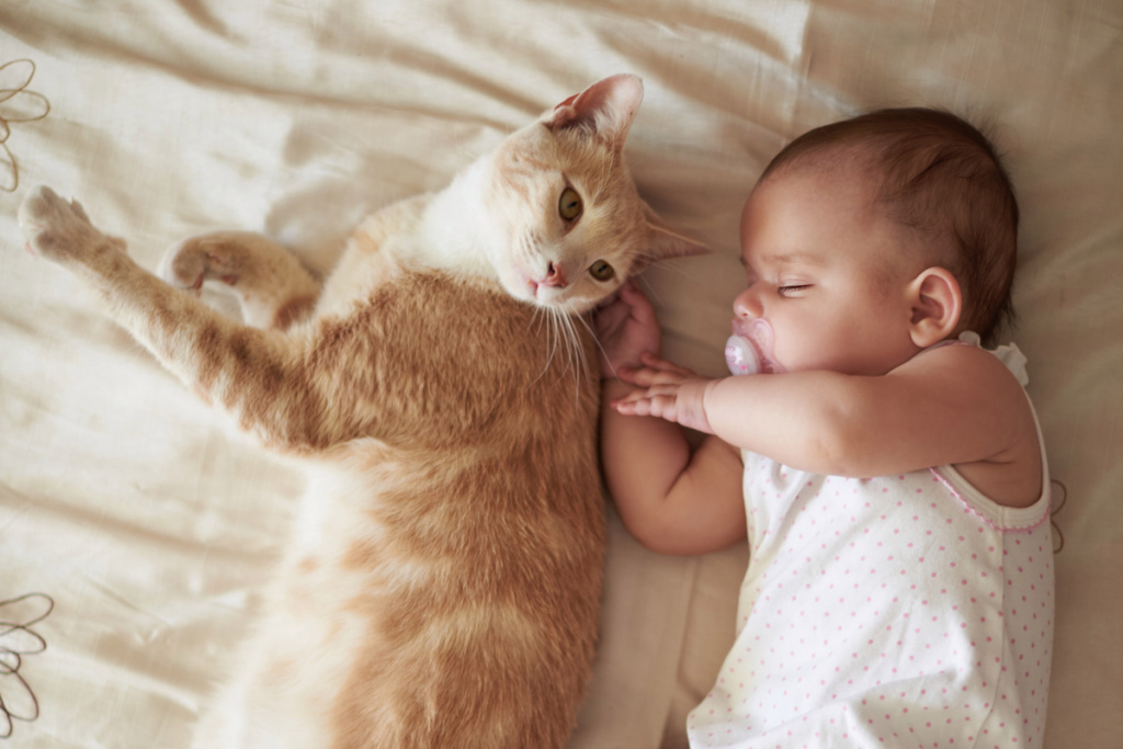Пушистые охранники: милые фото домашних котов и младенцев, которые растопят ваше сердце