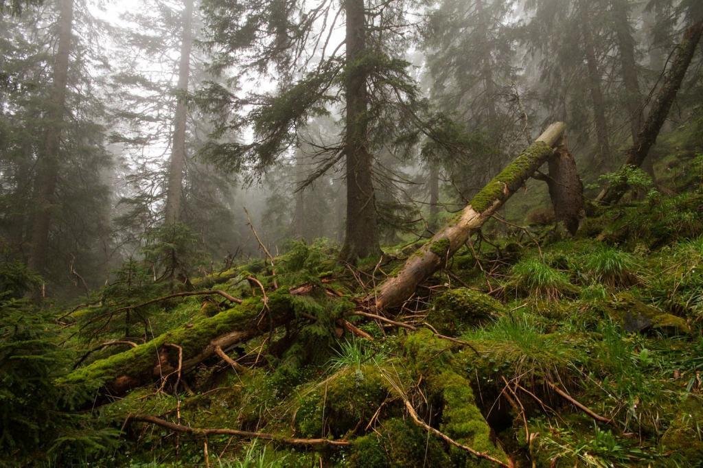 Наука на страже природы: российские леса будет охранять и контролировать искусственный интеллект