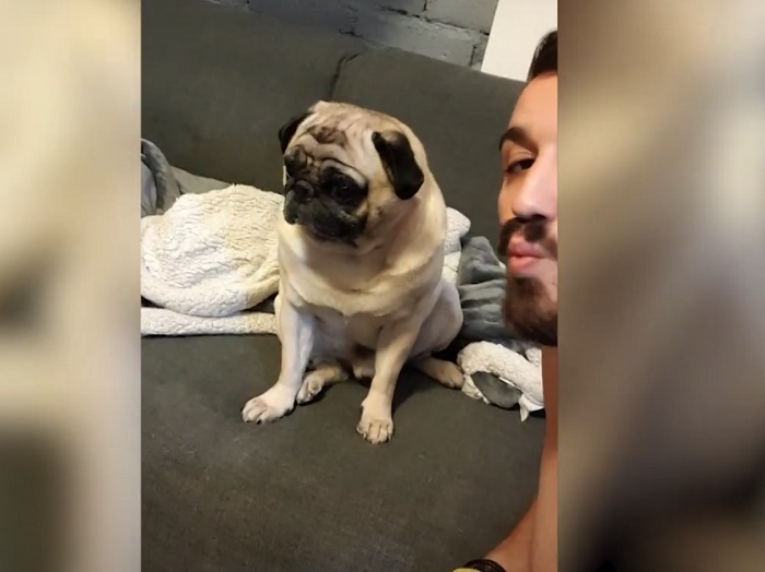 Хозяин хотел поцеловать своего пса, но тот был категорически против (видео)