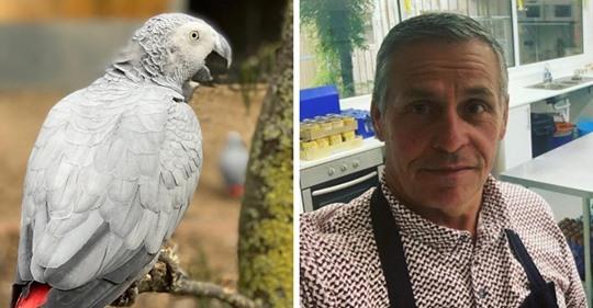 Британский зоопарк спрятал от гостей попугаев-жако. Они научились материться, а потом смеялись над собой