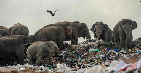 Как животные научились использовать мусор? Вы удивитесь