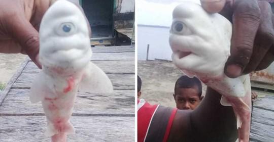 Одноглазая и белая: в Индонезии найдена акула-циклоп и вдобавок альбинос