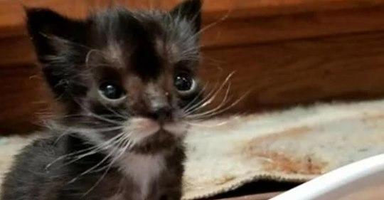 Крошечный котенок размер с ложку долго боролся за жизнь