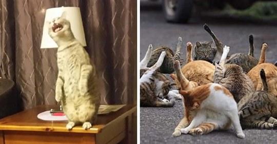 Хозяева в сети устроили челлендж, где показывают неудачные фото своих котов, за которые хвостатым было бы стыдно