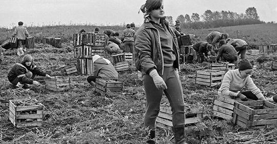 ЮНОСТЬ В СССР: КАК МОЛОДЕЖЬ ЕЗДИЛА НА КАРТОШКУ В КОЛХОЗЫ