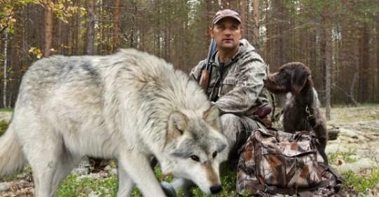 Степан спас волчонка, а через годы Волк пришёл к нему на помощь.