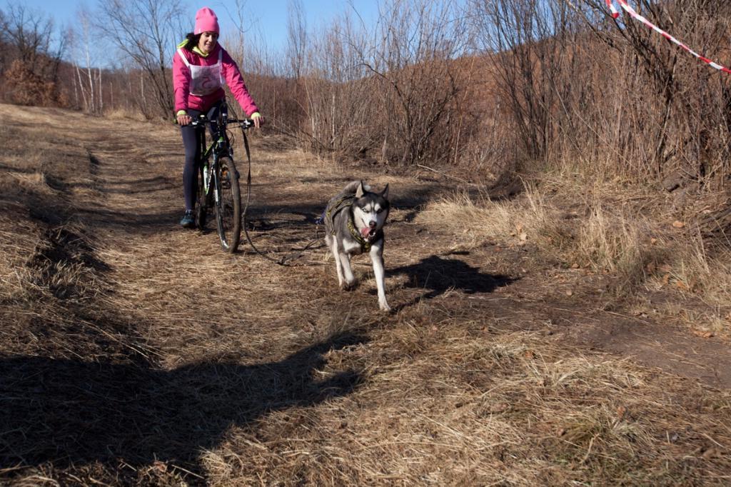 Ехали велосипеды, а впереди хаски, овчарки, маламуты: первенство в Амурской области по бесснежным гонкам с собаками