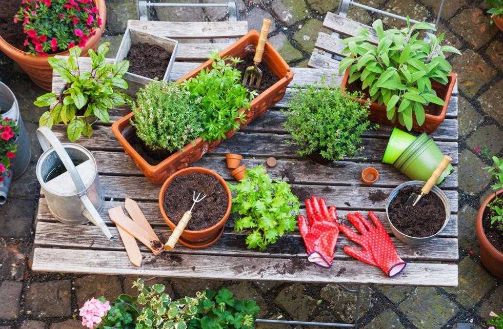 Как выбрать правильный размер горшка для ваших растений: садоводы оценят