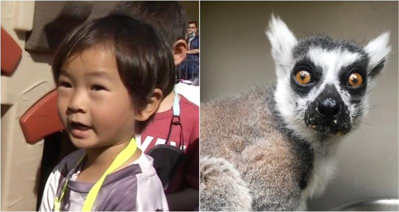 Из зоопарка Сан-Франциско украли лемура, а 5-летний мальчик помог его обнаружить
