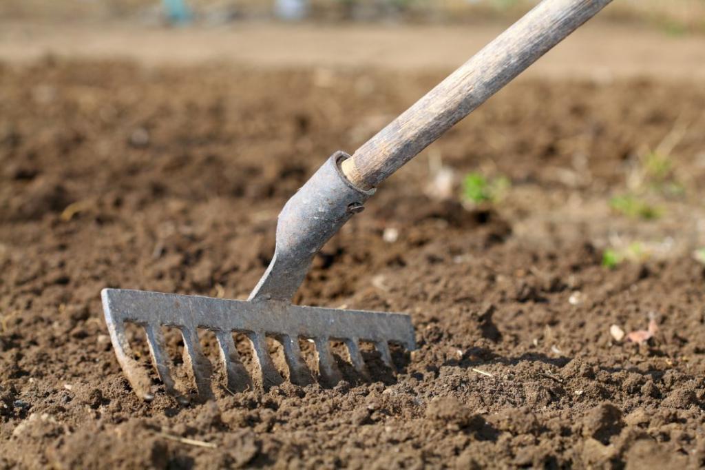 Как правильно подготовить грядки осенью, чтобы весной иметь отличный урожай: советы для кабачков, огурцов и других овощей