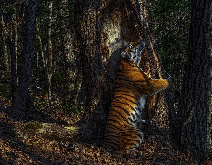 Сергею Горшкову понадобилось 11 месяцев, чтобы запечатлеть удивительный момент скрытыми камерами: лучшие снимки конкурса «Фотограф дикой природы 2020 года»