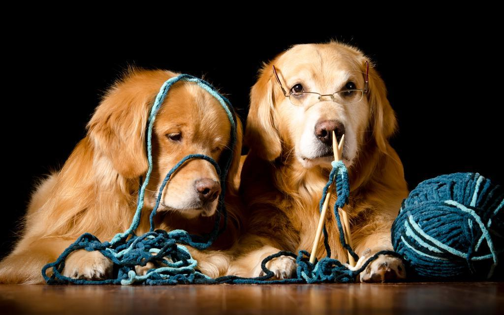 Собаки тоже взрослеют: ученые выяснили, почему со временем питомцы не проявляют интереса к игрушкам