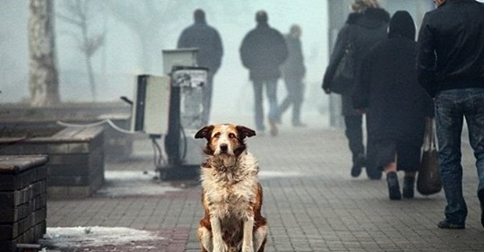 1 год тюрьмы или штраф 10 000 евро за брошенное животное в Италии