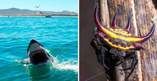 15+ пугающих фото, доказывающих, что природа может создавать не только милых зверят, но и суровых существ