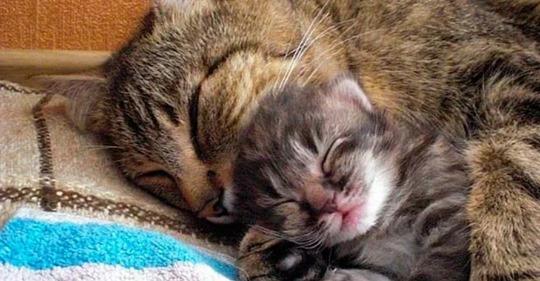 Кот привёл домой уличного котёнка, после чего возомнил себя папой, или мамой.