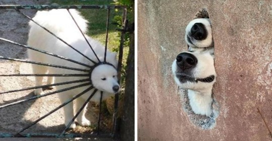 15 случаев, когда собаки вели себя как самые настоящие дурачки. Но от этого хочется любить их ещё сильнее
