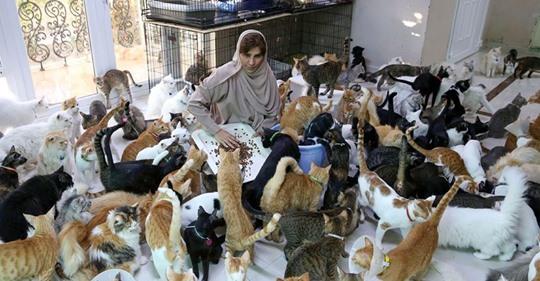 Рецепт женского счастья: 480 кошек, 12 собак и много денег на уход за ними
